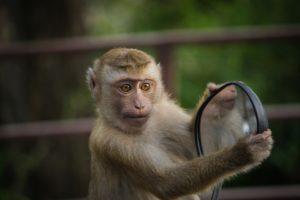 l'esprit du singe